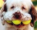 Animale - Cainele si tenisul