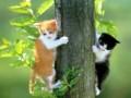 Animale - Pisici