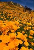 Flori - California