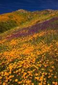 Flori - Camp cu flori