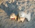 Animale - Casa de piatra micutilor