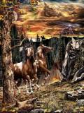 Iluzii - Cati cai sunt?