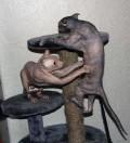 Animale - Cele mai urate pisici