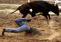 Animale - Cowboy