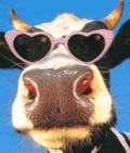 Animale - Vaca Cea SHMEKERA!!!