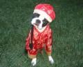 Animale - China-dog