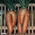 Ciudate - doi morcovi care au pofta de...