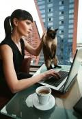 Animale - Doua pisici cautandu-si jumatatea pe net