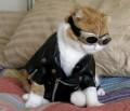 Animale - Draga nu ma mai bate la cap ca-mi iau motocicleta si plec