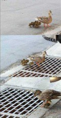 Animale - A mai ramas o ratusca :(