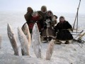 Animale - la pescuit la polul nord