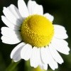 Avatare - Floare 3
