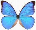 Avatare - Fluture albastru