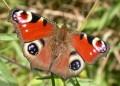 Diverse - Fluture ciudat