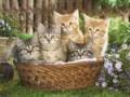 Avatare - Pisici