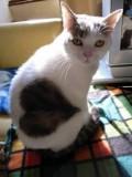 Animale - Pisicuta ce-si poarta dragostea pe blanita