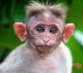 Animale - I-au crescut urechile cam mari