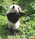 Animale - Kung Fu Panda