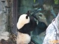 Animale - Vreau si eu afara