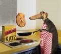 Animale - Cainele bucatar sef