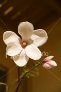 Flori - Floare de mar