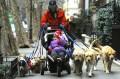 Animale - La plimbare cu copii