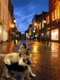 Animale - La o plimbare cu prietena