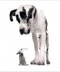 Animale - Mai mic si mai rau