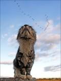 Animale - Mmmm, ce-as manca un porumbel
