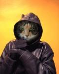 Animale - Motanul mafiot