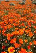 Flori - Multe multe floricele