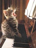 Animale - musical cat