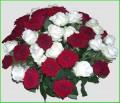 Flori - O adevarata explozie de sentimente