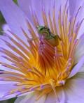 Artistice - O broscuta gingasa