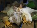 Animale - Oare stie langa cine doarme?