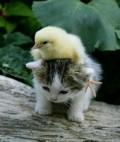 Animale - Puiul jucaus