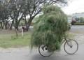 Diverse - Cum sa cari iarba cu bicicleta
