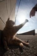 Animale - Si uite asa, Dumnezeu a creat pisica!
