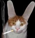Animale - Pisicuta urechiata