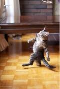 Animale - Este timpul sa dansam...