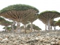 Artistice - Pomi in forma de ciuperca