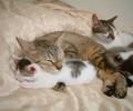 Animale - Dragoste de mama