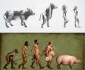 Caricaturi - Evolutia omului