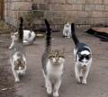 Animale - Pussycat Dolls