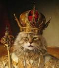 Animale - Regele Motan
