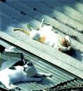 Animale - Cu burta la soare !