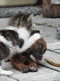 Animale - Stai ca am vazut un purice