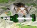 Animale - Sunt fumator si alcoolic