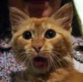 Animale - O pisica speriata