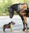 Animale - Tata si fiu